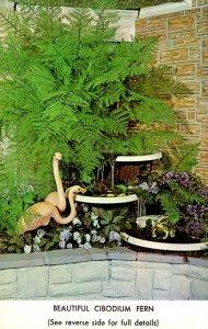 Pennsylvania Philadelphia Beautiful Cibodium Fern From Joseph Murphy 65th & C...