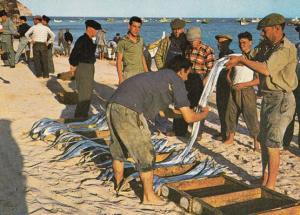 Sesimbra Fishing Selecting Fish Markets Portugal Postcard