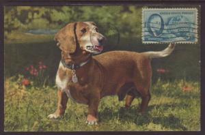 Bassett Hound,Dog Postcard
