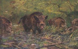 Wild Pig , 00-10s