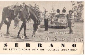 Educared Horse - Serrano, Psychic Horse w College Education