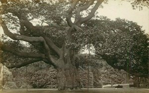 RPPC Postcard Calderstone Liverpool Giant Tree Crooked Branches