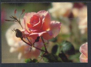 Rose BIN