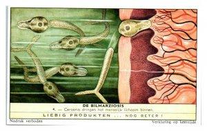 Cercaria Invade Humans Schistosomiasis Bilharziosis Liebig Belgian Trade Card