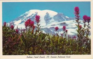 Washington Mt Rainier National Park Indian Paint Brush Wild Flower
