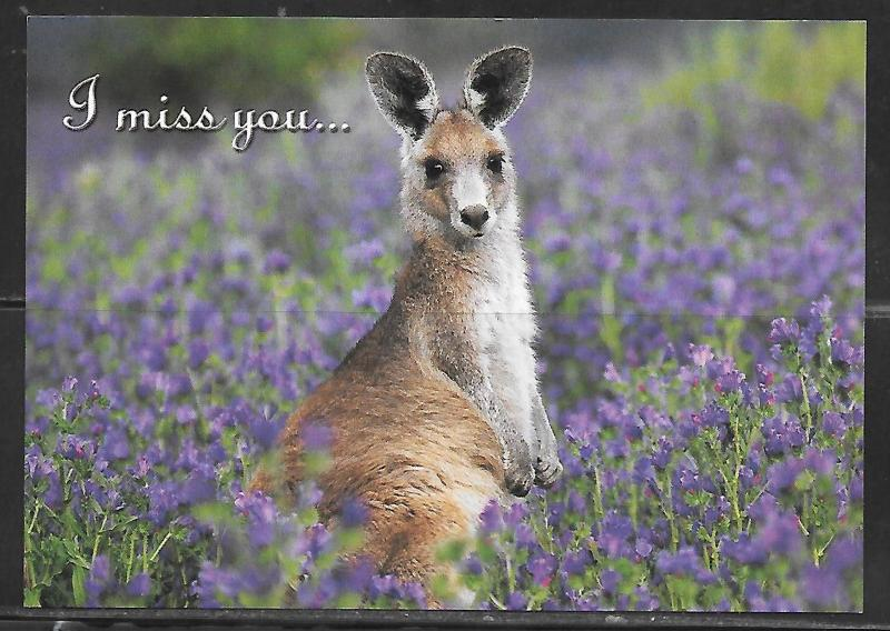 "Australia Kangaroo ""I miss you"", unused, addressed"