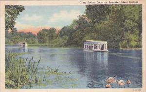 Florida Silver Springs Glass Bottom On Beautiful Silver Springs 1947