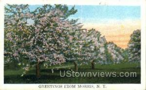 Morris, New York, NY Post Card Postcard Morris NY Postal Used Unknown