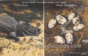 Florida, USA Florida's Everglades National Park Postcard Post Card Florida, U...