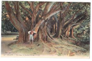 Algeria Botanical Garden Jardin d'Essai c 1910 L.L. Postcard