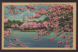 US Capitol,Cherry Blossoms,Washington,DC