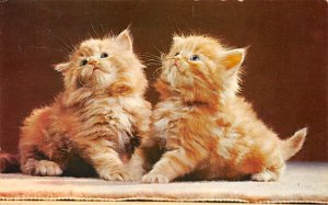 Cat Post Card, Cats Postcards Red Persians Kittens 1961