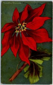1910s California Christmas Holiday Postcard Ponsettia Blossoms Rieder c1910s
