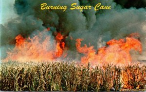 Hawaii Burning Sugar Cane Before Being Harvested