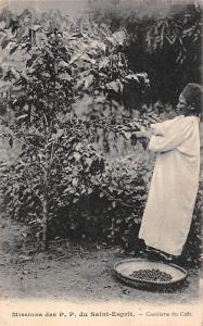 Africa, Missions des P.P. du Saint-Esprit, Cueillette du Cafe, Picking Coffee