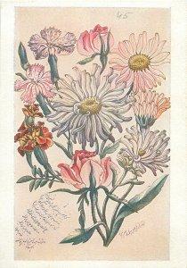 Iran miniature flowers  Postcard