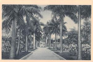 Habana Cuba, Republica de Cuba Royal Palm Avenue, Colombus Park Habana Royal ...