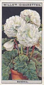 Wills Vintage Cigarette Card Flower Culture In Pots No 8 Begonia  1925