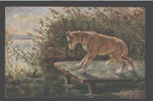 086805 Australian CATTLE DOG & FROG Bog by STOCKS vintage PC
