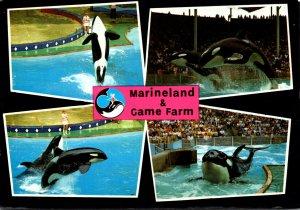 Canada Niagara Falls Marineland and Game Farm Showing Killer Whale 1980