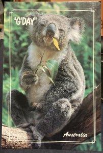 Australia Koala - Unposted Large Card