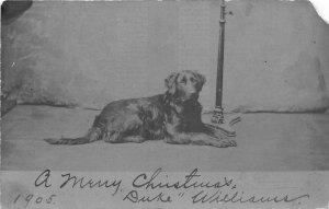 F54/ Rising Sun Indiana RPPC Postcard 1905 Christmas Dog Pet