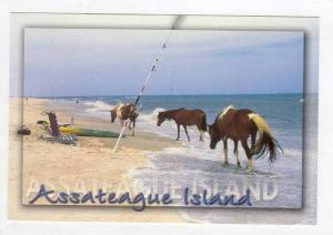 Assateague Island, Horses on beach, Virginia, 70-80s