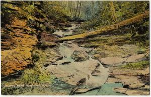 1907-15 Binghamton NY Ravine Near Broome Co. New York RARE Antique DB Postcard