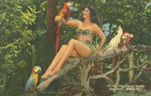 The Parrot Jungle, Red Road, Miami, Florida, unused linen...