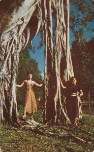 Trinidad and Tobago Ceylon Willow 06.95