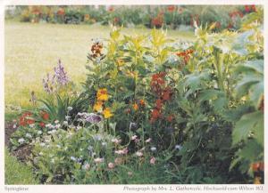 Hockwold Cum Wilton Norfolk Thetford Village Spring Flowers Postcard