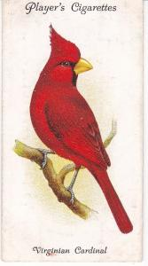Cigarette Cards Playe Aviary and Cage Birds No 41 Virginian Cardinal