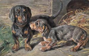 Two Dachshunds, PU-1907