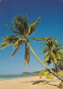 Palm Trees, Ellis Beach, North of Cairns, North Queensland, Australia, 1960-70s