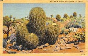 Barrel Cactus Visnaga on the Desert 1944