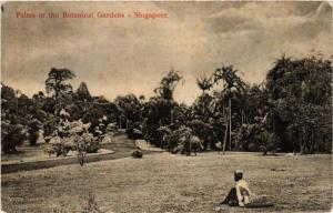 SINGAPORE PC Palms in the Botanical Gardens (a1442)
