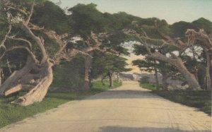 DEL MONTE , Ca , 00-10s ; Cypress on 17 Mile Drive