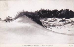C R Childs Company Duneland Study A Sentinel Of Sand Real Photo