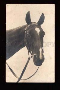 018888 Head of Charming HORSE. Vintage Photo PC
