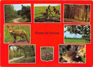 BG5473 fox renard bird oisseaux greoten uit renkum netherlands