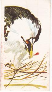 Trade Card Brooke Oxo Vanishing Wildlife No  20 Bearded Vulture (Lammergeir)