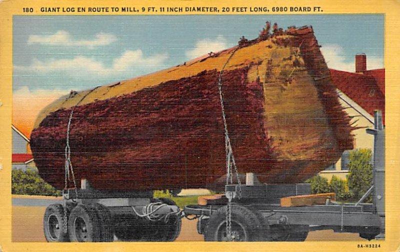 Giant Log En Route to Mill Unused