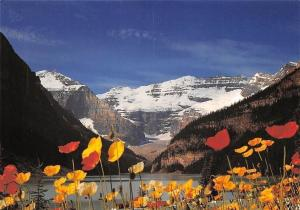 Canada Lake Louise famous Icelandic poppies, fleurs, mountains, Alberta