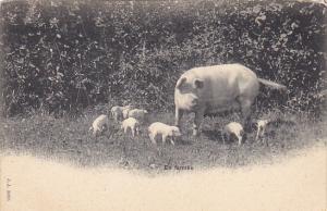 Pigs En Famille