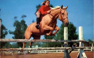 Equestrian - Blueblood Jumper