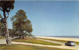 Mississippi Gulf Coast Highway 90~50s Cars Driving Past Beach & Pine Trees
