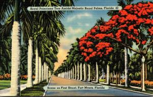 Florida Fort Myers Royal Poinciana Trees and Royal Palms Along First Street