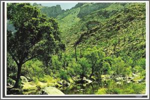 Arizona Spring in Sabino Canyon Postcard