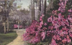Magnolia Gardens California Handcolored Albertype 1931