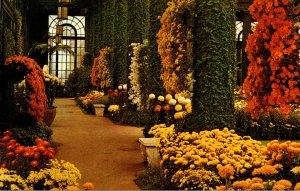 Pennsylvania Kennett Square Longwood Gardens Main Conservatory With Chrysanth...